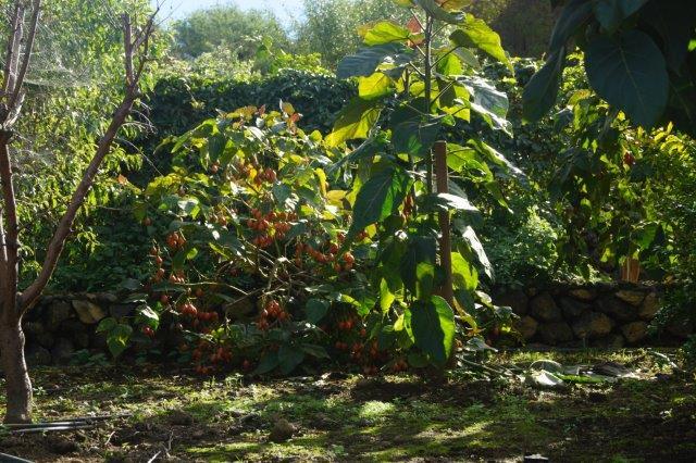 Biologische Landwirtschaft Teneriffa - Bio Finca