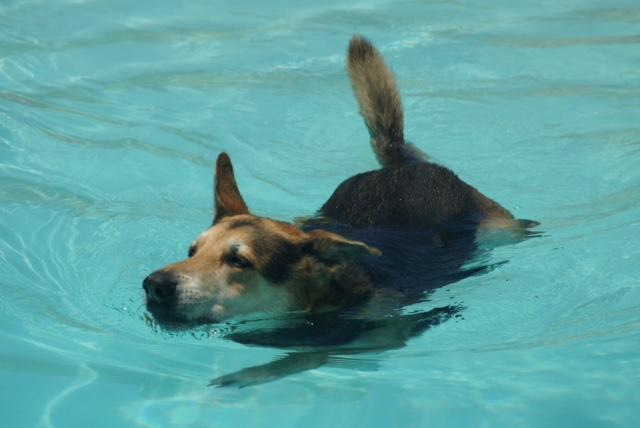 Wandern mit Hund auf Teneriffa