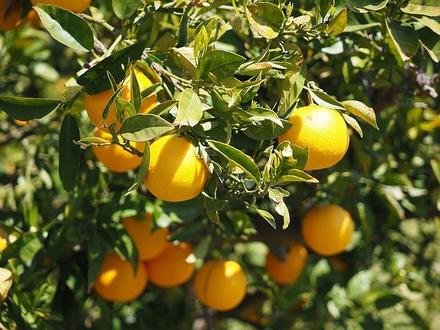Obst von der Biofinca - Obstgarten Teneriffa