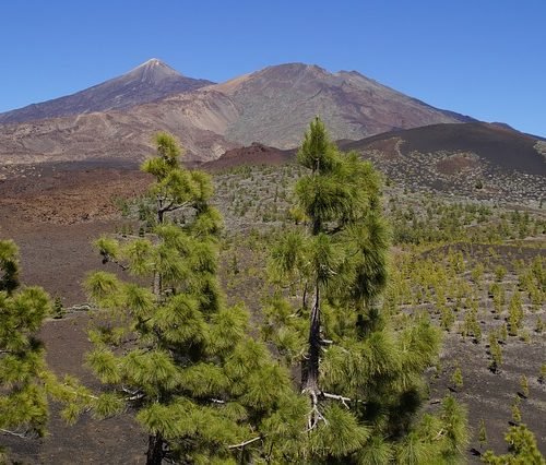 teide-national-park-2423830_640