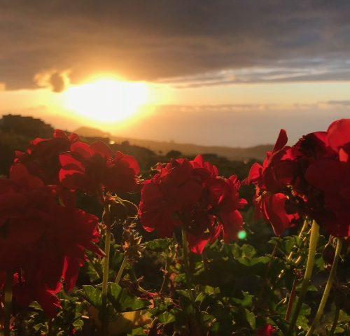 Urlaub abseits vom Massentourismus - Urlaub auf der Finca